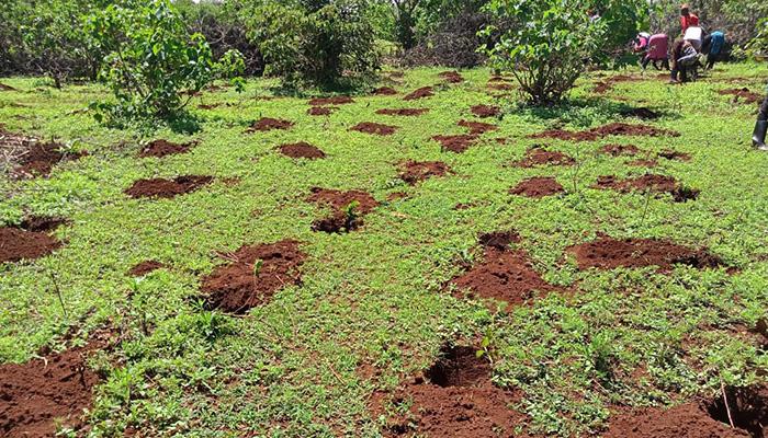 Eden Reforestion Project Kenya 2