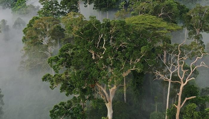Rainforest Trust Forest